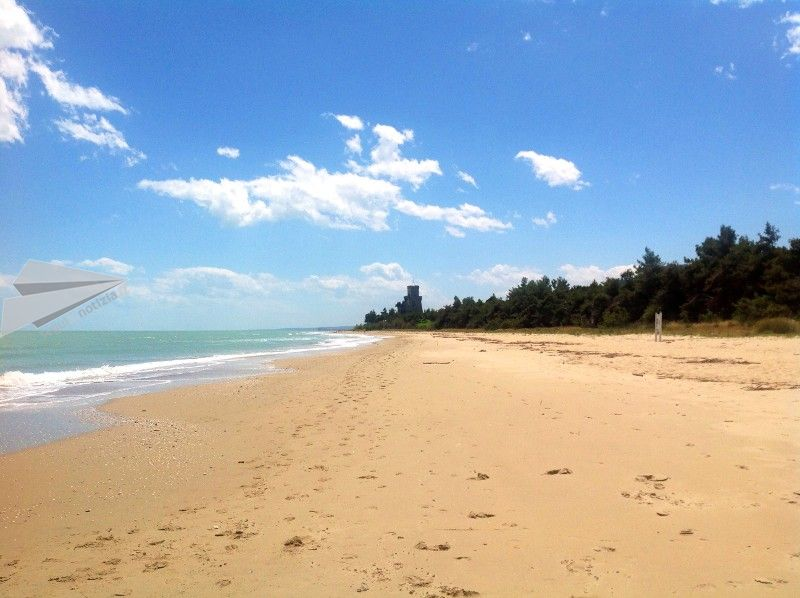 pineto spiaggia jpg